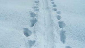 Traces yéti neige