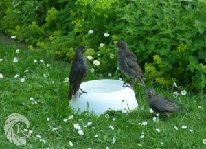 Duel au sommet oiseaux baignade