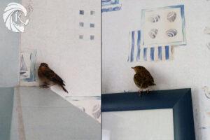 Surprise de trouver un oiseau dans sa salle de bain